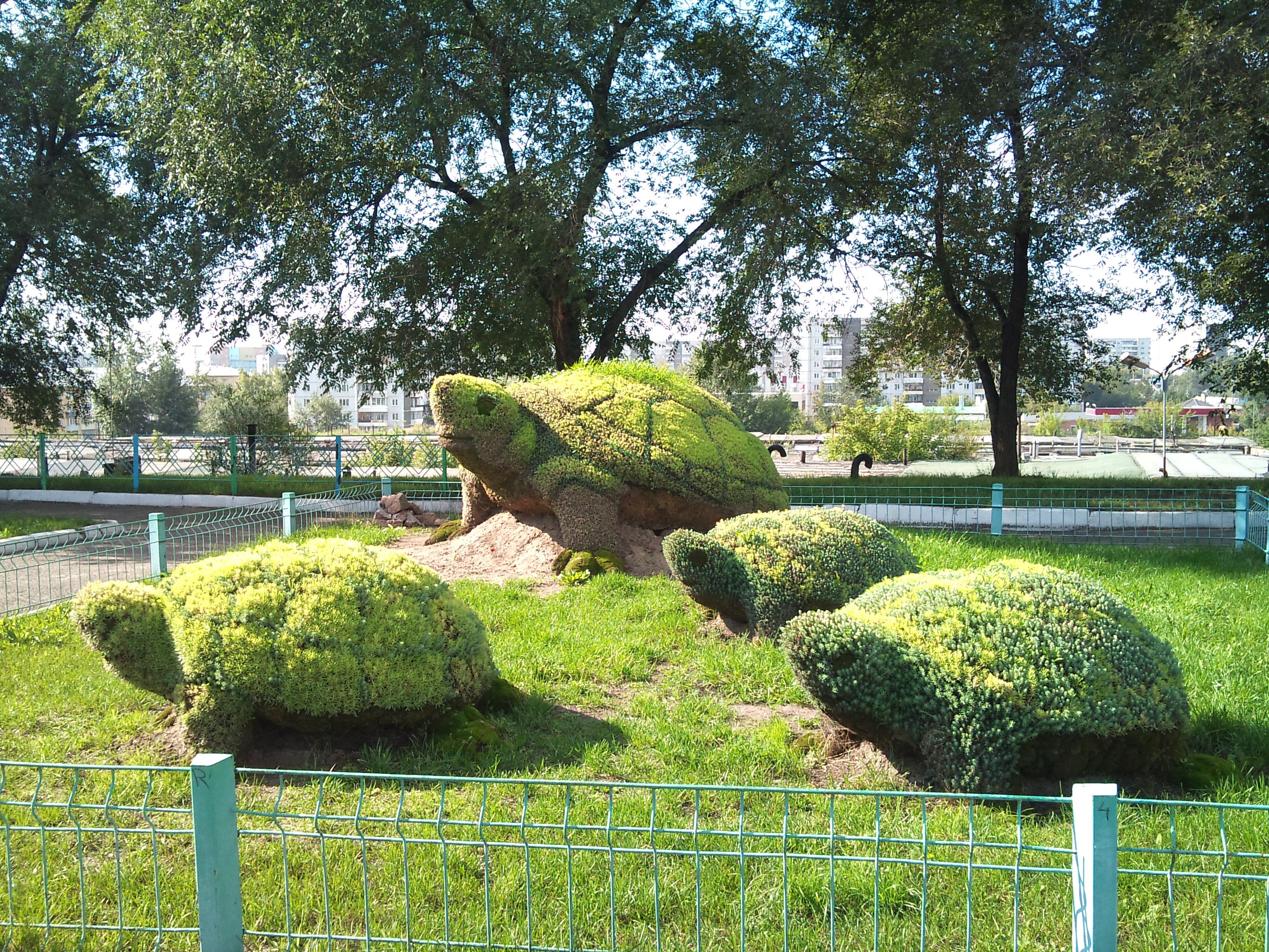 Красноярск Цветочные фигуры Черепахи возле Дворца Труда. 1.09.2012 года